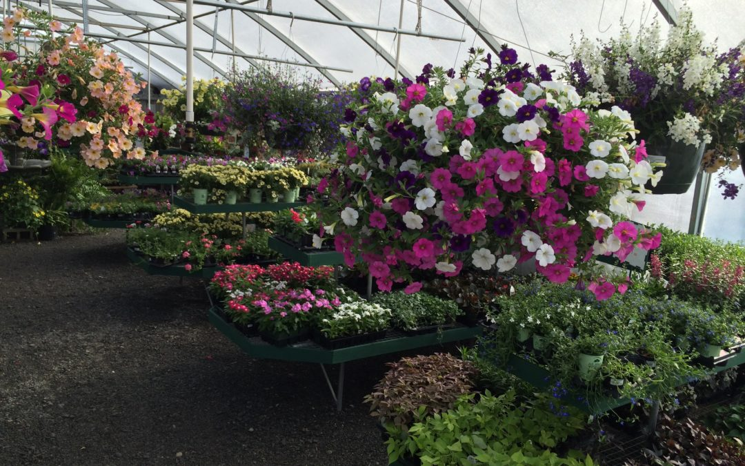 Beautiful hanging baskets and ferns just arrived.