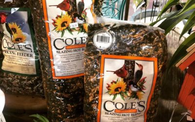 "Coles's ""The better wild bird seed!"""